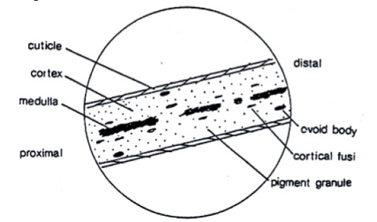 animal hair microscope